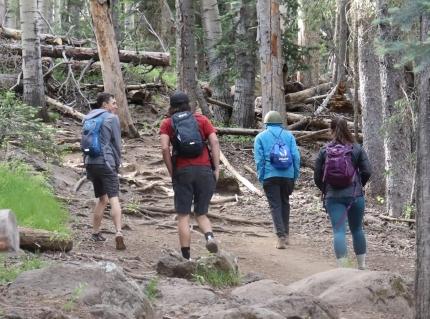 Foto: Vier Jugendliche beim Wandern durch einen Fichtenwalde